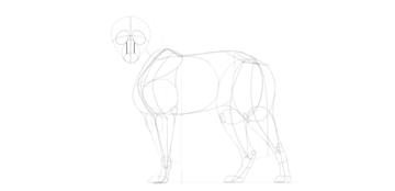 wolf drawing nasal bridge