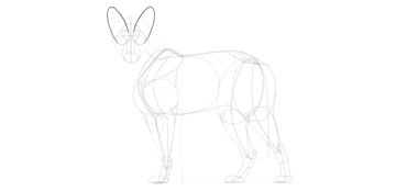 wolf drawing ears