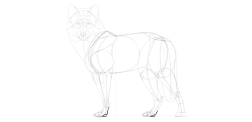 wolf drawing back paws