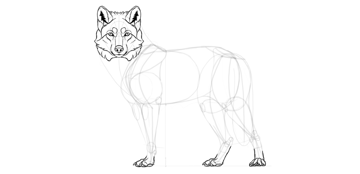 wolf drawing paws details