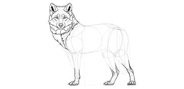 wolf drawing neck fur