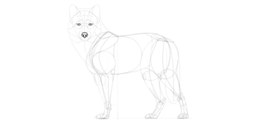 wolf drawing eyes outline