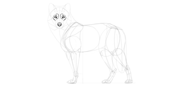 wolf drawing expression