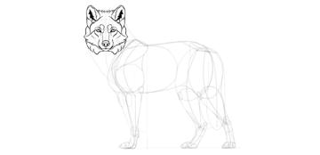 wolf drawing head fur