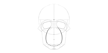 human skull mouth shape