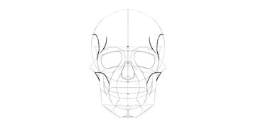 human skull side detail