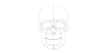 human skull smile curve