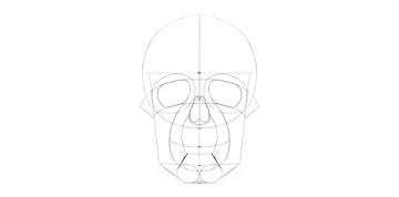 human skull chin details