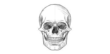 human skull shaded