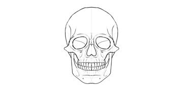 human skull details outline
