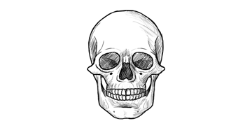 how to draw human skull