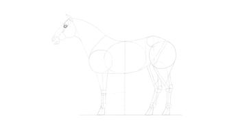 horse drawing eye shape