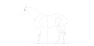horse drawing eye socket