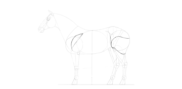 horse drawing simple muscles