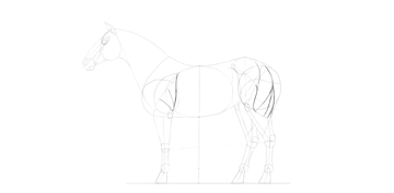 horse drawing advanced muscles