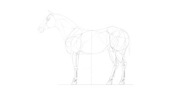 horse drawing special details