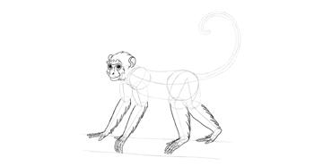 monkey drawing limbs fur