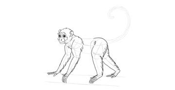 monkey drawing thigh fur