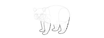 panda drawing fluffy legs