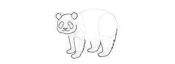 panda drawing head shape