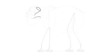 elephant cheekbone