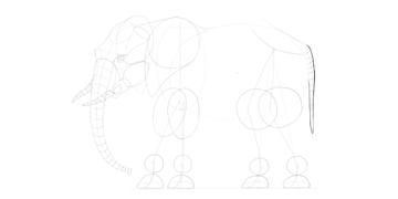 elephant tail outline