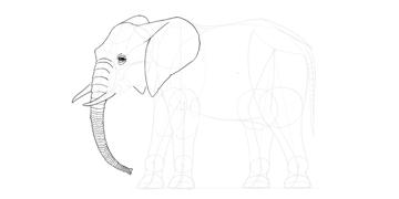 elephant trunk back