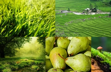 the meaning of green