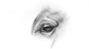 how to draw horse eye