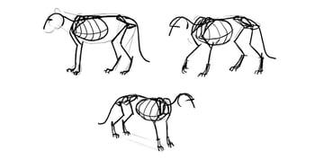 lion skeleton studies