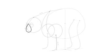 bear drawing simple muzzle