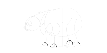 bear drawing paws width