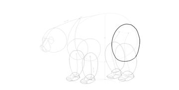 bear drawing thigh