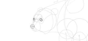 bear drawing full eyelids