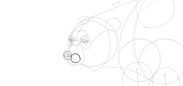 bear drawing shisker area
