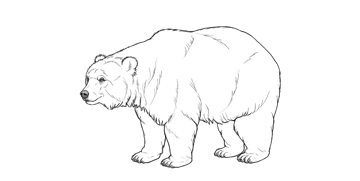 bear drawing eye patches