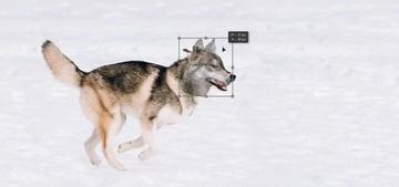 resize wolf head