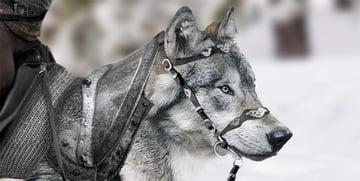 copy fur