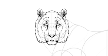 draw the tiger head