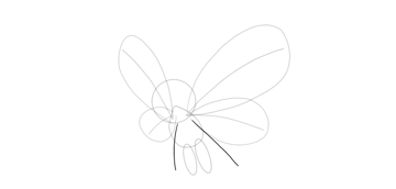 draw lower wings butterfree