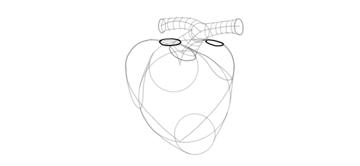 sketch base of aorta