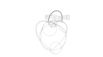 sketch shape of aorta