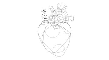 draw 3d shape of vena cava