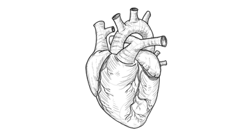 add details to the heart