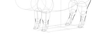 finish pig legs