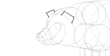 draw pig ears base