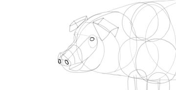 draw pig nose