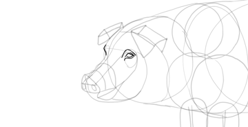 draw pig eyes