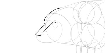 draw pig nose bridge