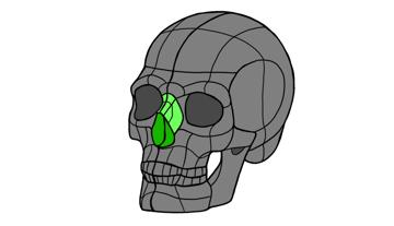 skull nose bone